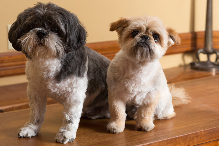 Willoughby and Biba - Our Dogs