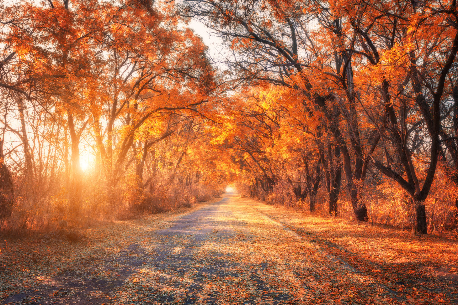 Country Road During Autumn Sunset